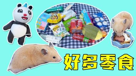放暑假了,主人带着小仓鼠一起去野餐