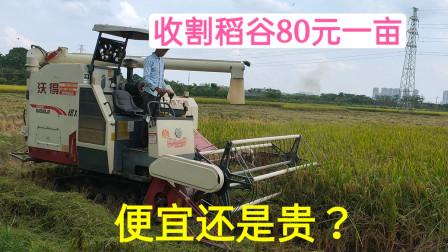 河南安徽收割机来广西农村收稻谷,80元一亩,这价格便宜还是贵?