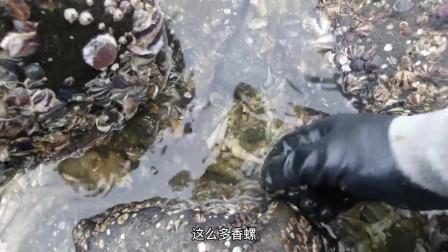 赶海抓到好多螃蟹和鱼,收获喜人真是太痛快了