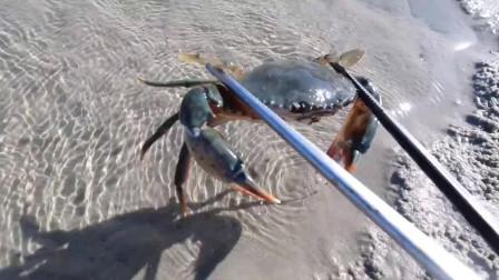 赶海收获好多大螃蟹,这一趟真是太爽了啊