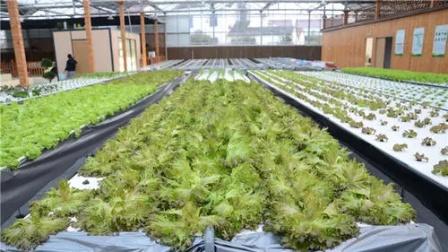 阿里数字蔬菜工厂