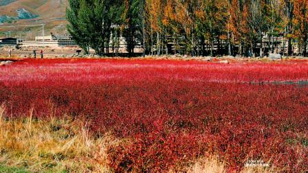 桑堆红草地 网红景点稻城四绝之一 川西大环游