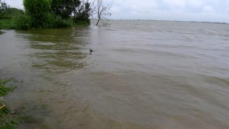 钓位直接被淹了,渔具被卷进水里,暴雨天钓鱼要注意安全