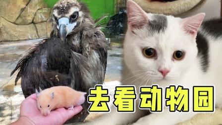 把猫咪留家里带仓鼠出去玩,猫咪生气不理人