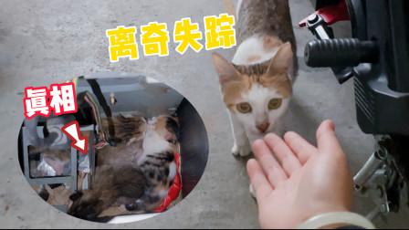 失踪半年的流浪猫再次现身,还带着4只小奶猫!猫:我回来坐月子