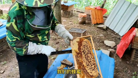 陕西大山深处,纯天然蜂蜜,需要购买的请私下跟我联系。