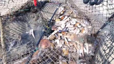 小伙赶海发现一个破地笼,没想到里面有那么多的石斑鱼
