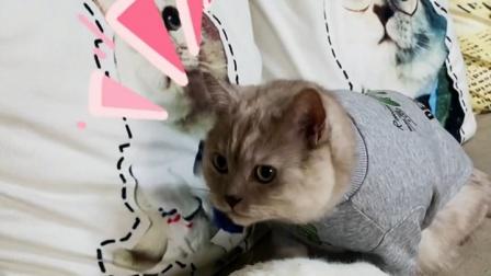小猫咪难道真的认为人类幼崽,是它的孩子?
