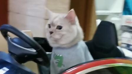 养猫千日,用猫一时,猫粮没白吃!