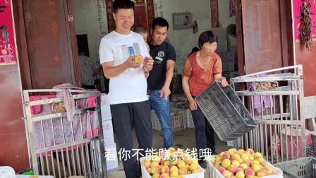 到福建批发340斤锦绣黄桃,卖200%利润,卖一天看看赚了多少钱