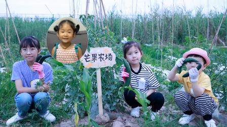 农场vlog:小粉丝芒果认领农场,艾米儿帮她制作了漂亮的农场牌