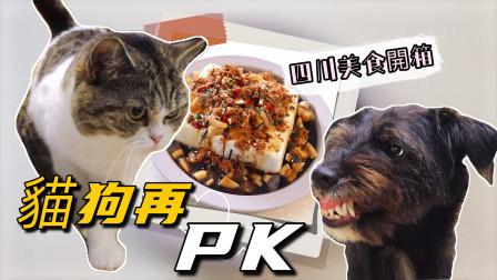 美食开箱现场猫狗相争围观,黑狗想吃独食,龇牙吓猫险挨揍