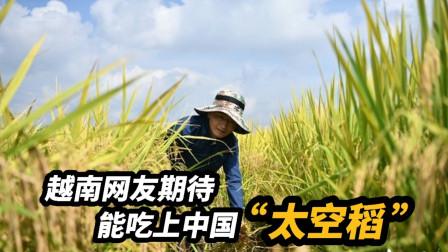 """中国航天科技助力农业结硕果。越南网友:希望早日吃上""""太空稻"""""""