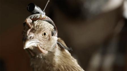 """鸡头的稳定性为什么这么牛,装个摄像头,马上变成摄像""""鸡""""!"""
