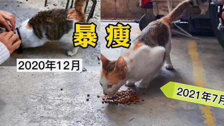 流浪猫做妈妈了!把小奶猫生在机箱里,差点被当垃圾丢掉