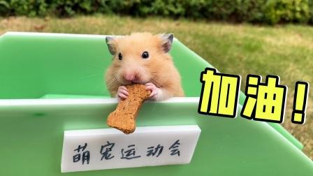 为了小仓鼠参加运动会,主人努力训练小仓鼠