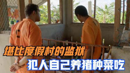 这座监狱就像休闲度假村,犯人自己养猪种菜吃,真实监狱纪录片