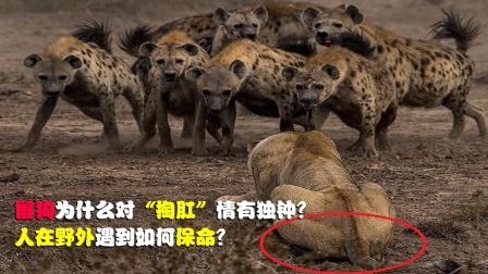 为何鬣狗会对掏肛情有独钟,它有啥可怕?人在野外遇到如何保命?