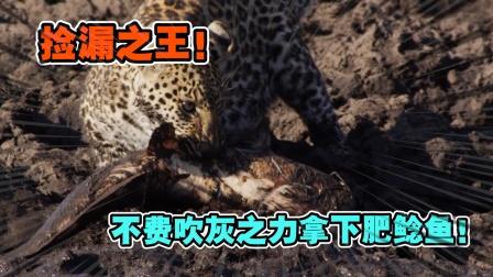 动物世界:连年的旱季让肥鲶鱼失去庇护所,被猎豹成功捡漏带走