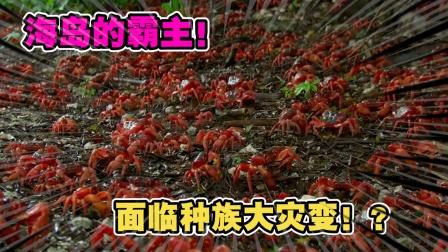 动物世界:一股海上风暴,让海岛霸主寄居蟹迎来了种族危机!
