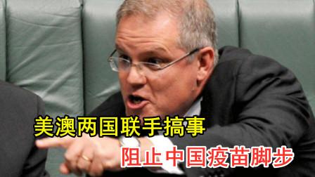 """澳大利亚和美国狼狈为奸,无端指责中国:在南太搞""""疫苗外交"""""""