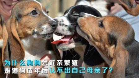 为什么狗狗会近亲繁殖?