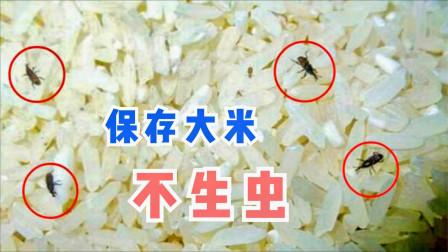 大米生虫不用晒,粮店老板教一招,大米放一年都不生虫,快学学