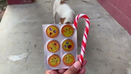 小狗狗想不想吃巧克力