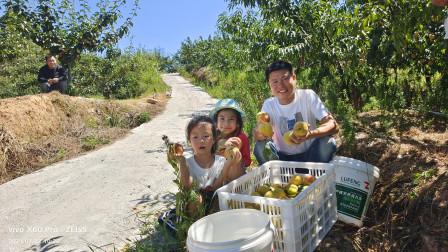 花500块钱果园包桃子摘,5个人采20分钟,时间到了老板笑了