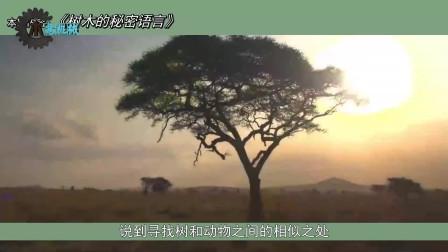 """植物之间是否会沟通,树木的""""秘密语言"""""""