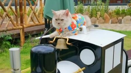 开火车的猫也太厉害了吧,十八的幸福生活!