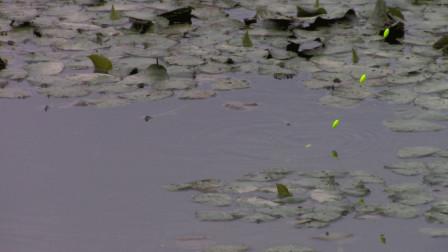 窝子里的鱼泛滥了,下钩就咬不空竿