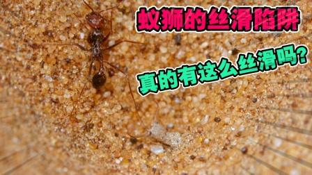 动物世界:七十多度的高温沙漠下,赤蚁落入了蚁狮的丝滑陷阱中!