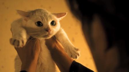 狗子雇杀手暗杀猫咪,不料杀手却是一个猫奴!萌翻天喜剧片