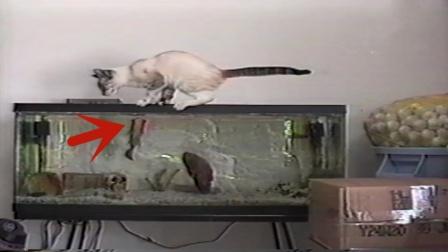 """小猫想吃鱼缸里鱼,结果一不小心踩空,下一秒鱼的操作""""成精""""了"""