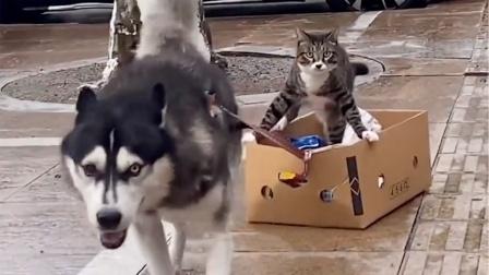 猫:哈哥慢点 你超速了 小心前面交警