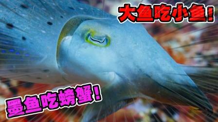 动物世界:看似美丽的海底珊瑚丛林中,却暗藏着可怕的危险!