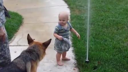 宝宝指挥狗狗玩水,接下来狗狗的反应,全家都笑坏了!