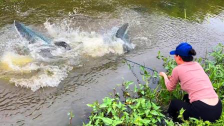 5年无人管理的水塘,妹子撒一网下去看看,哇!这么大是鱼吗?