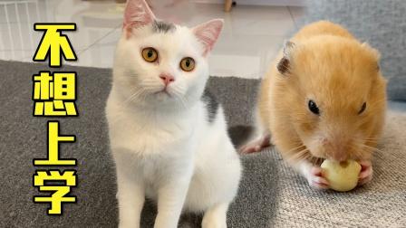 小猫咪不想上学,原因却是小仓鼠,怎么回事