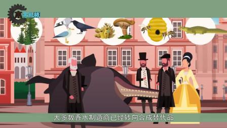 为什么抹香鲸的粪便比黄金更值钱,捡到一块立马暴富!