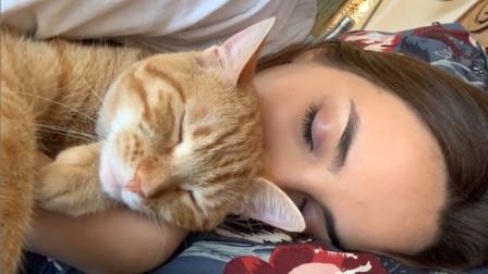 人类只是猫猫的枕头和床,这波铲屎官的日常,非常真实了