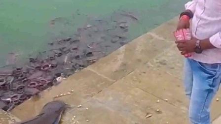 外国男子喂了一点鱼食就想套近乎, 结果下一秒打脸了, 简直不要太搞笑