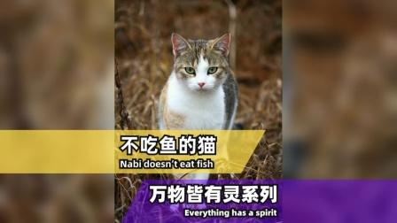 流浪猫为啥不吃鱼?50岁大叔一探究竟!