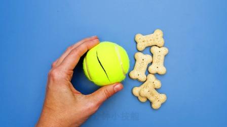 狗狗有口臭?不爱玩新玩具?自拍不看镜头?