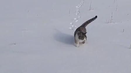 主人一喊猫咪,狸花猫们就排队一条线跟着领头猫来到主人身边!
