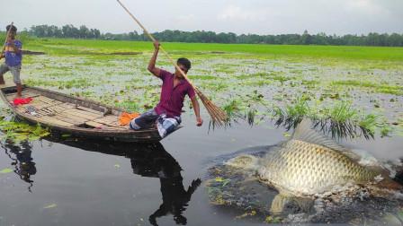 小哥野外抓鱼,仅仅一根鱼叉,见到大鱼就叉,一叉一个准,厉害了