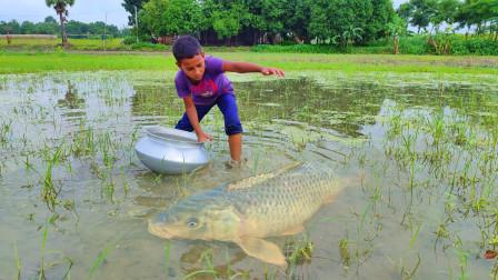 农村男孩水田里寻野,哇!有大鱼,看看他抓获了多少?