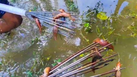 兄弟俩水塘里抓泥鳅,一人一根鱼叉一阵乱叉,收获真不错!