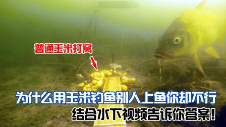 为什么用玉米钓鱼,别人上鱼你却不行,结合水下视频告诉你答案!
